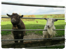 some of the animals at court farm