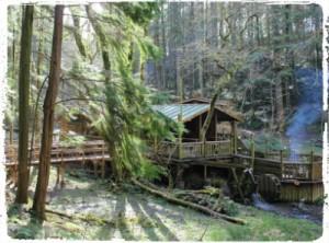 bluestone camp smokey