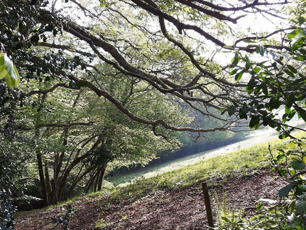 robin hill spring